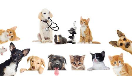 puppy and kitten vet