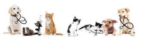 estetoscopio: perrito y gatito veterinario Foto de archivo