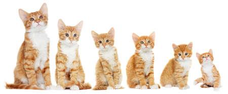 Kitten looking, white background Stock Photo