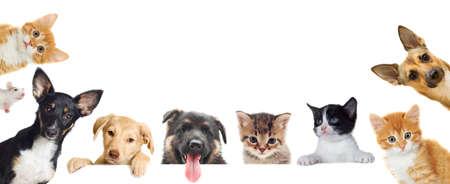 conjunto de mascota busca Foto de archivo