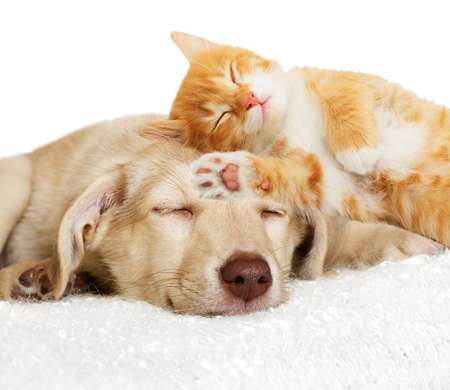 kitten and puppy sleeping