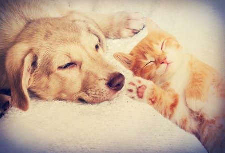 子猫と子犬が寝ています。