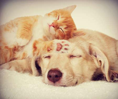 puppy love: gatito y perrito durmiendo