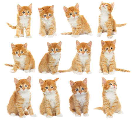 cute kitten: set of kittens Stock Photo
