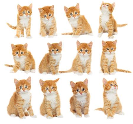 set of kittens Stockfoto