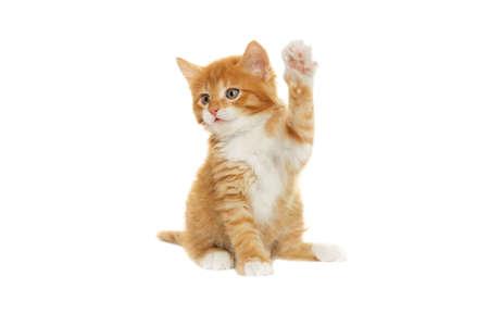 子猫の前足を調達 写真素材