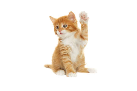kitten paw raised up