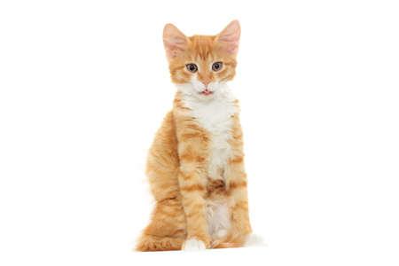 chaton recherche