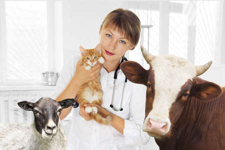 veterinarian and pets at the clinic Stock Photo