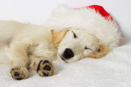 of beige: Beige puppy