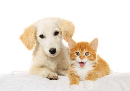 Beige puppy and red kitten watching 版權商用圖片