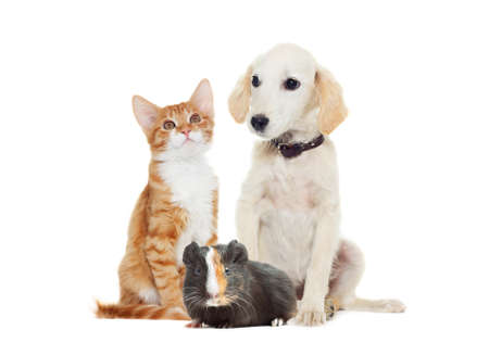 Set pets  looking Stock Photo