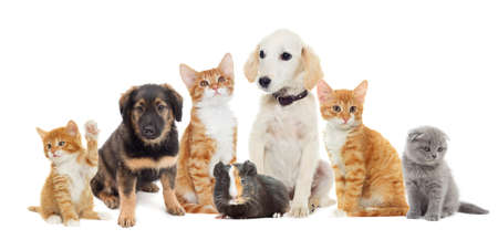 many pets  looking Stock Photo