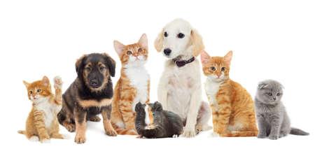Muchos animales domésticos que buscan Foto de archivo - 50880701