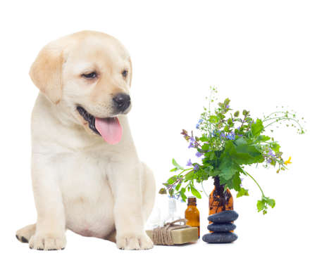 spa objects and labrador puppy Stock Photo