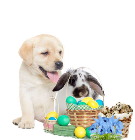 Easter bunny and puppy