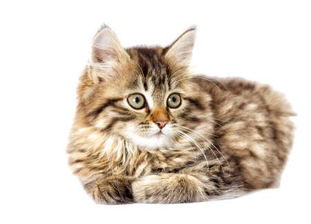tabby kitten looking