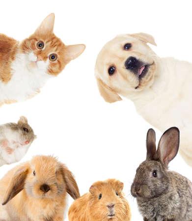 ensemble d'animaux de compagnie Banque d'images