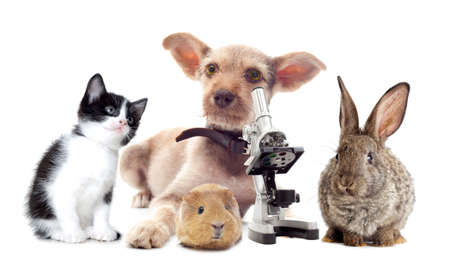 Puppy and microscope