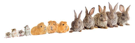 rodents: rodents set Stock Photo