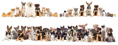 Chat et chien sur un fond blanc isolé Banque d'images - 60193101