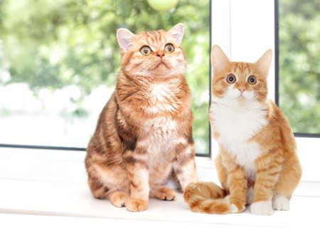 windowsill: cat sitting on a windowsill Stock Photo