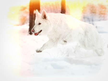 white dog running in the winter snow