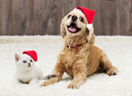 kitten and puppy in the New Year and Christmas hat Stock Photo