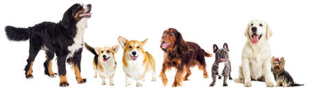 set of dogs Stock Photo