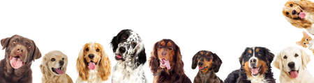 portraits of a group of dogs