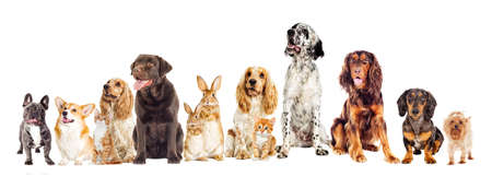 set of pets on a white background Stock Photo