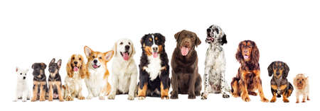 Set of dogs on white background looking Stock Photo