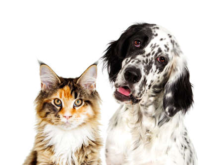 Dog and cat portrait Stock Photo