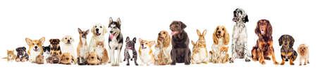 set pets  Archivio Fotografico