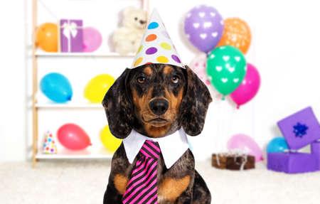 holiday dog birthday
