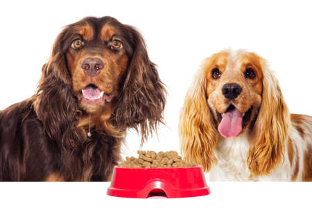 hungry dog and a bowl of dry food
