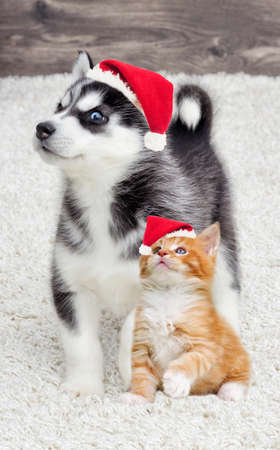 kitten and puppy together in a New Years cap