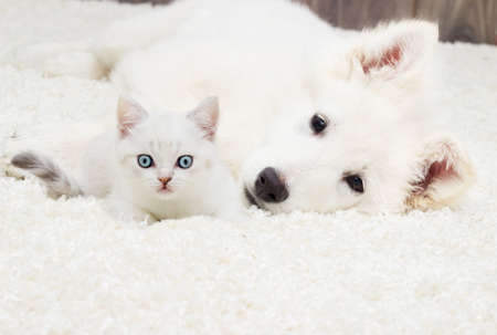 kitten and puppy on a fluffy carpet