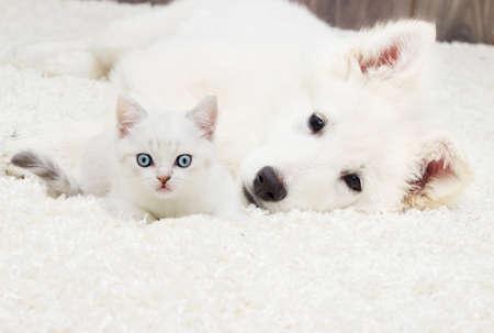 子猫と子犬フワフワ カーペットの上