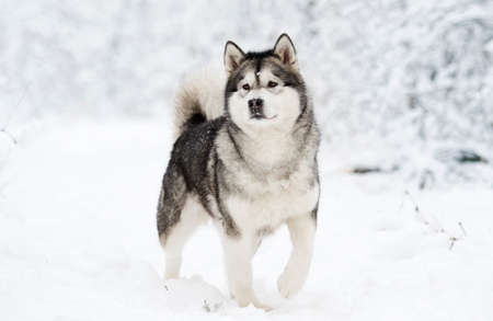 dog on a winter Imagens