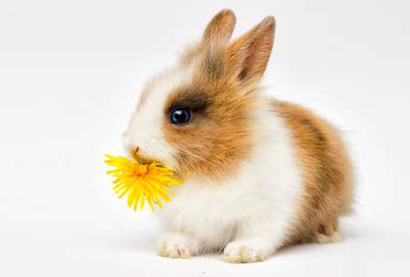 lustiges Kaninchen auf weißem Hintergrund