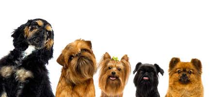 set of dogs peeps on white background