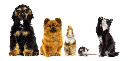 Reihe von Haustieren sieht auf weißem Hintergrund aus