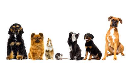 set of pets looks on a white background Banco de Imagens