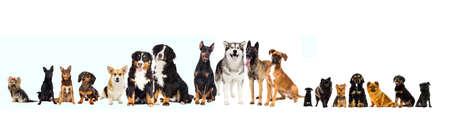 Reihe von Haustieren, Hunde, die auf weißen Hintergrund schauen