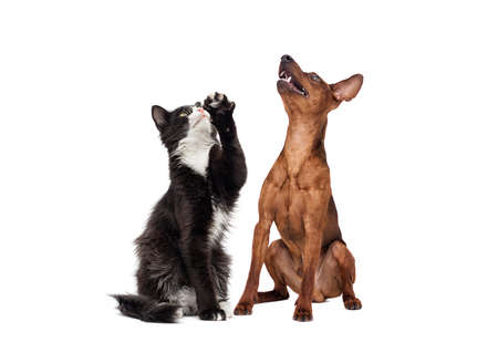 dog and cat looking up on a white background