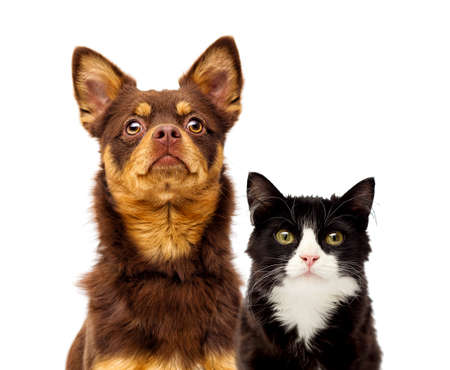 dog and cat portrait together on a white background Banque d'images - 130051596