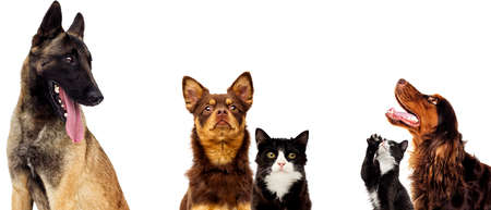 dog and cat portrait together on a white background