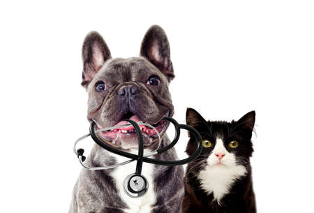 Portrait of Veterinarian dog and stethoscope Stock fotó