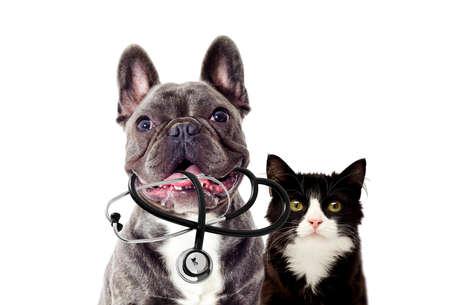 Retrato de perro veterinario y estetoscopio